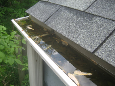 Professional gutter cleaning in Gurnee, IL